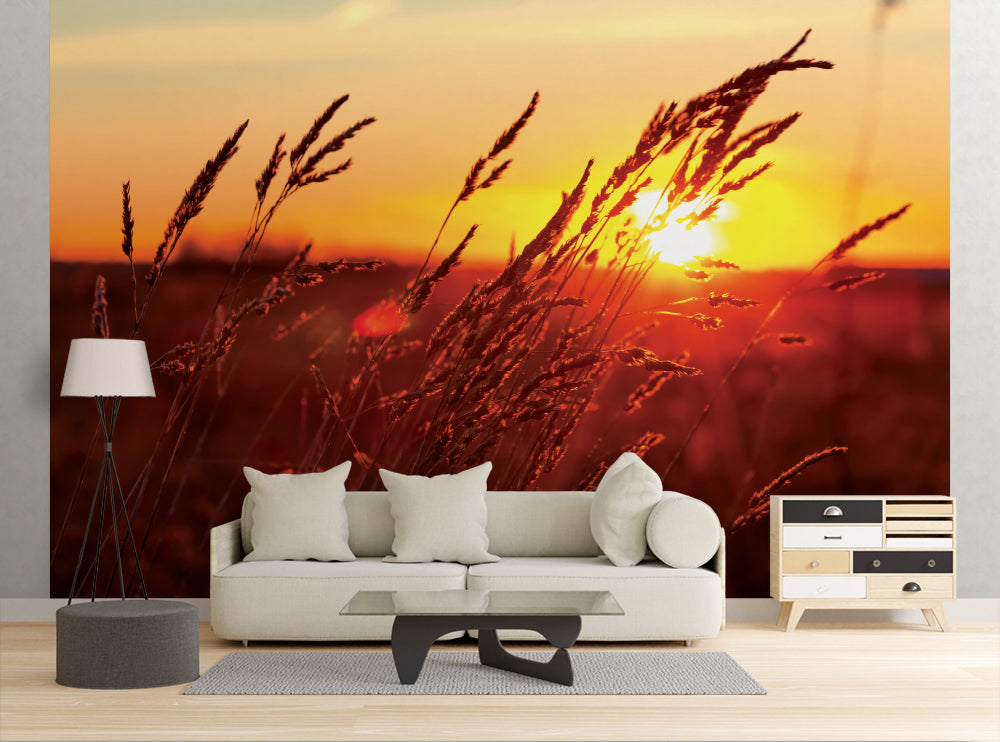 Sunset Grass - Wall Mural
