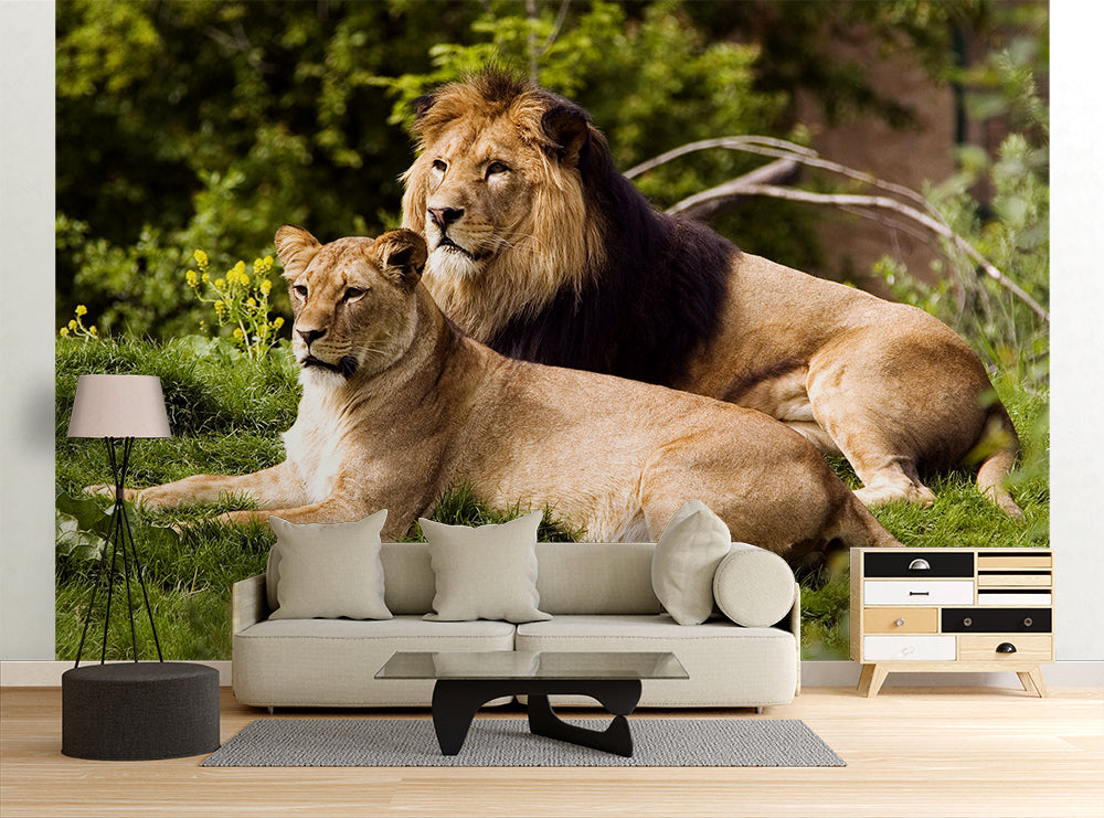 Lounging Lions - Wall Mural
