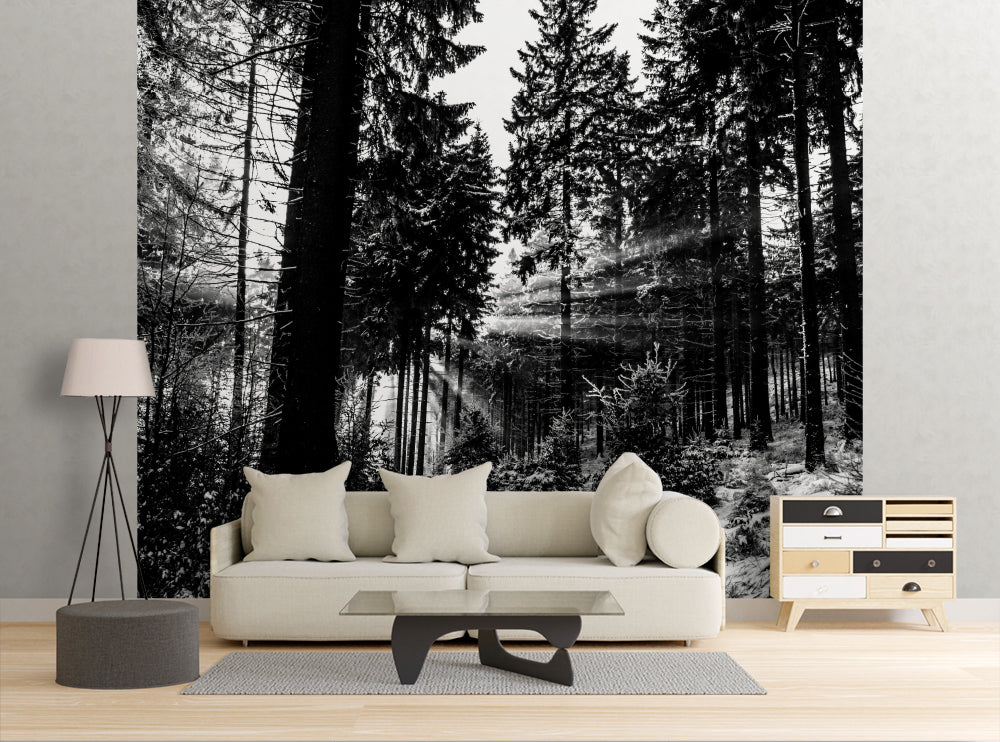 Backlit Trees - Wall Mural