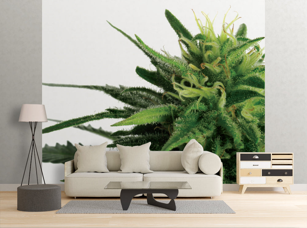 Cannabis - Wall Mural