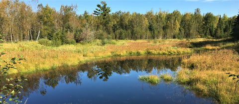 Fall on the Munger Trail