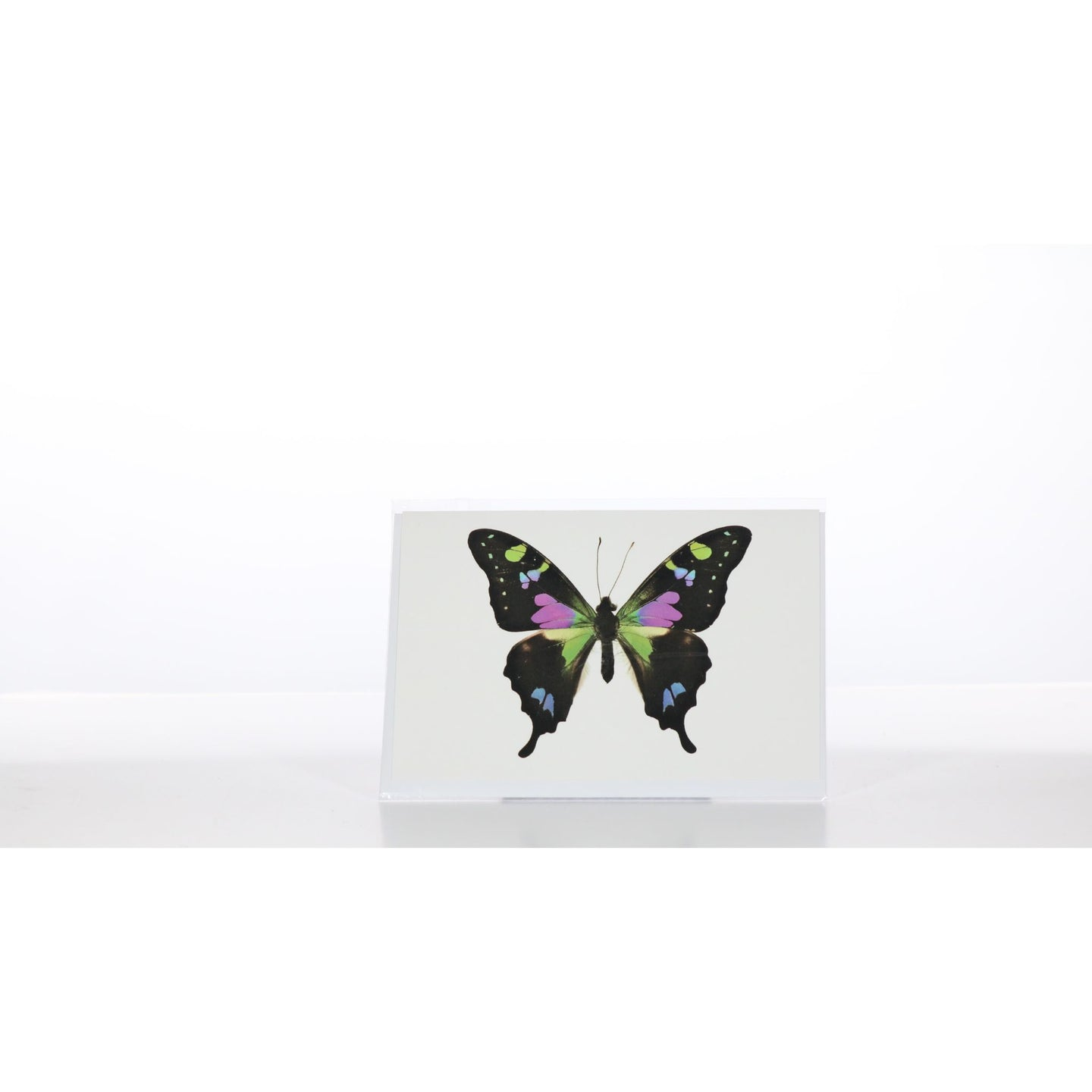 Greeting Card GC13 - Insecta Etcetera