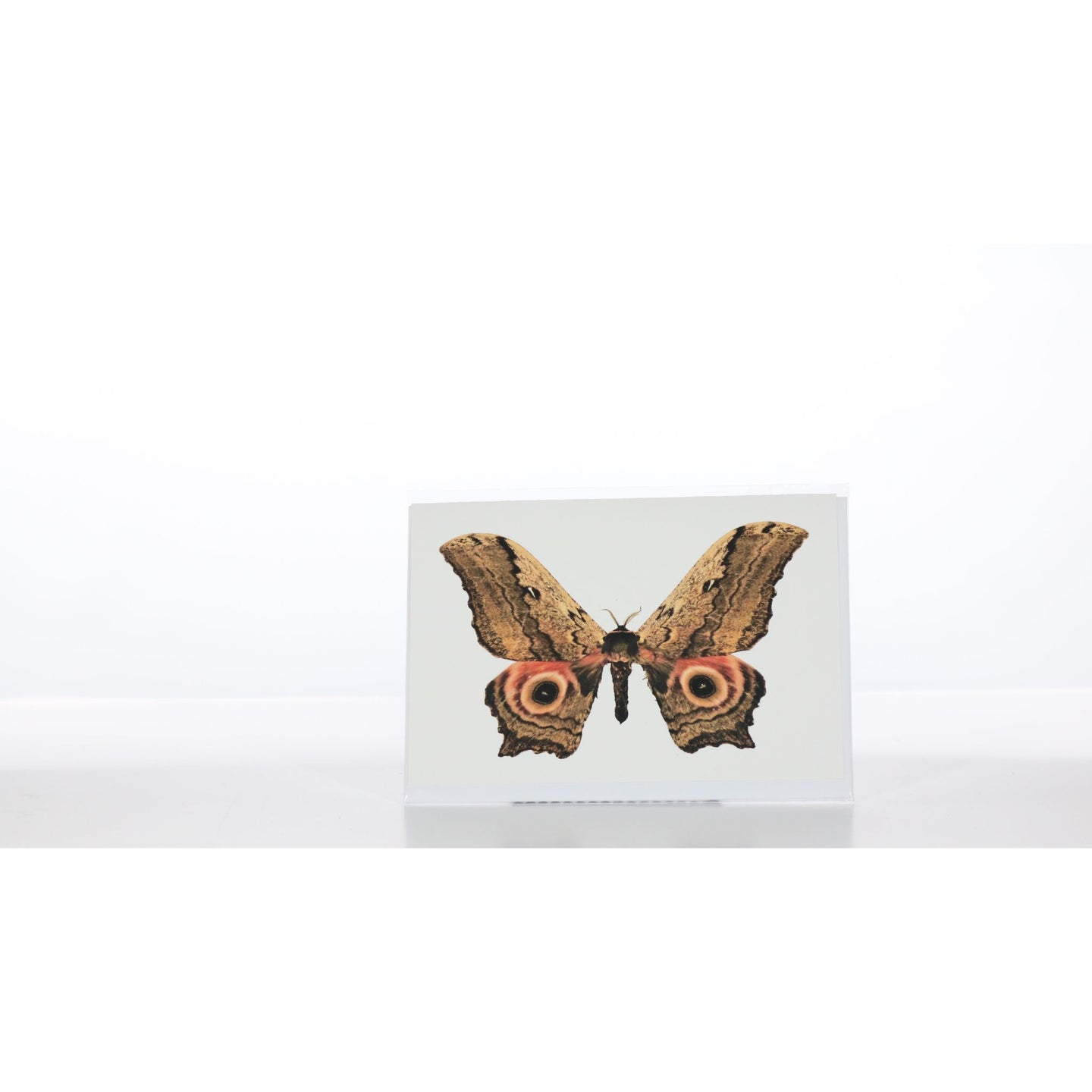 Greeting Card GC14 - Insecta Etcetera