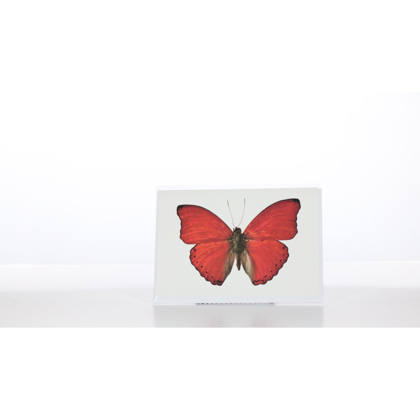 Greeting Card GC16 - Insecta Etcetera