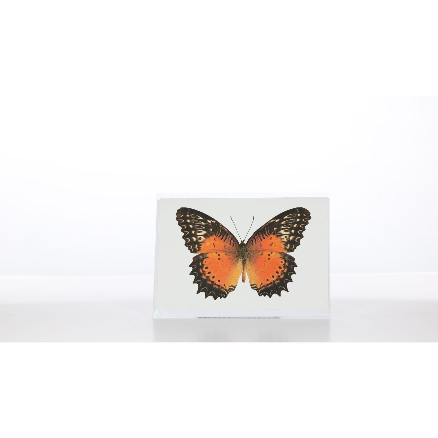 Greeting Card GC18 - Insecta Etcetera