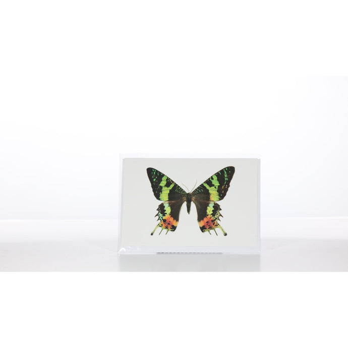 Greeting Card GC19 - Insecta Etcetera