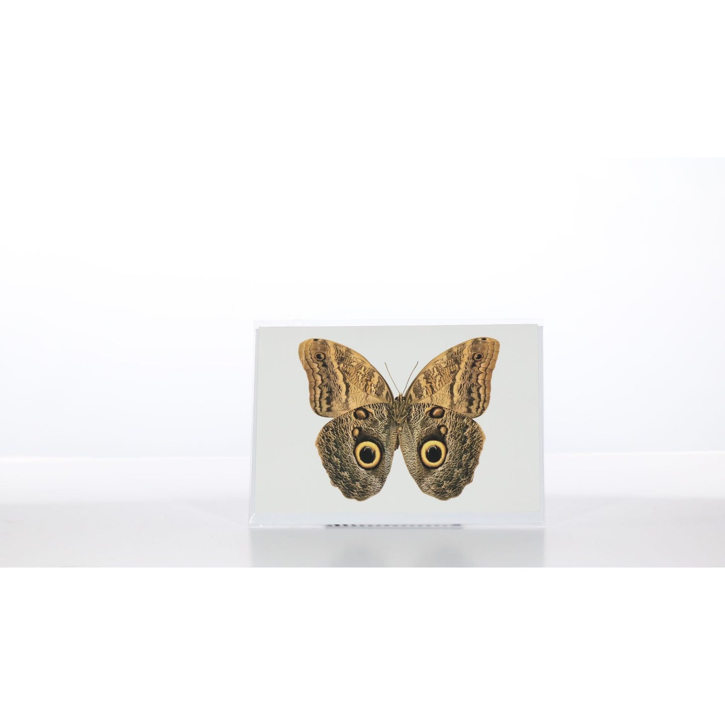 Greeting Card GC20 - Insecta Etcetera