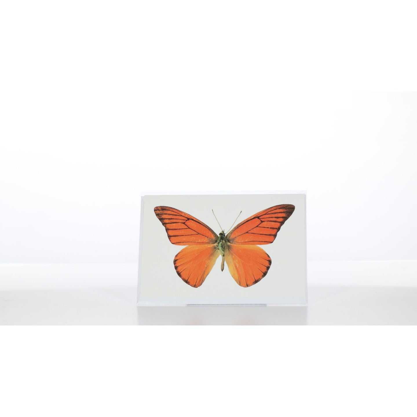 Greeting Card GC21 - Insecta Etcetera