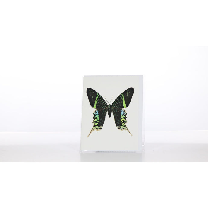 Greeting Card GC22 - Insecta Etcetera