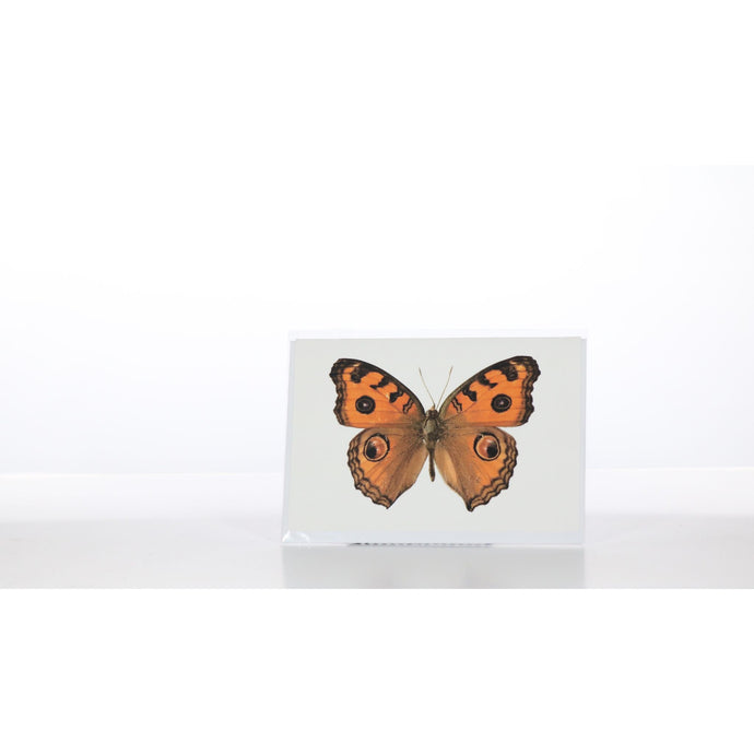 Greeting Card GC23 - Insecta Etcetera
