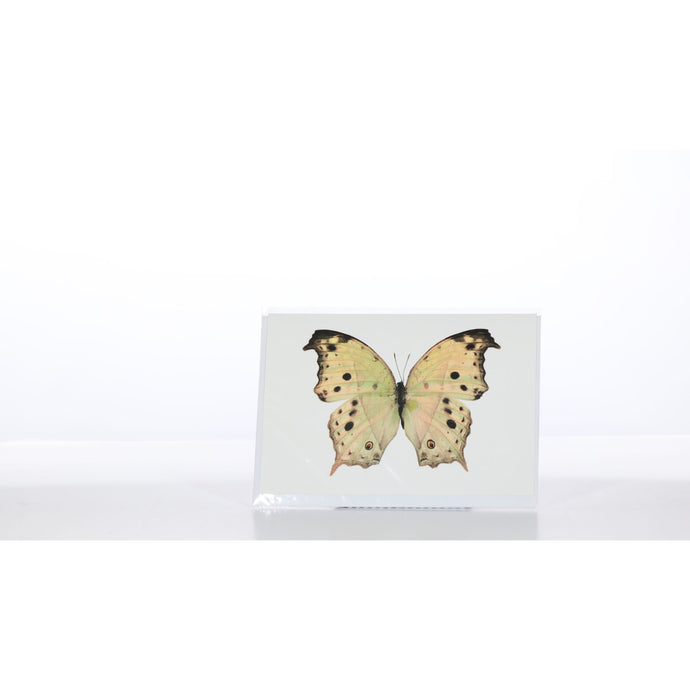 Greeting Card GC24 - Insecta Etcetera