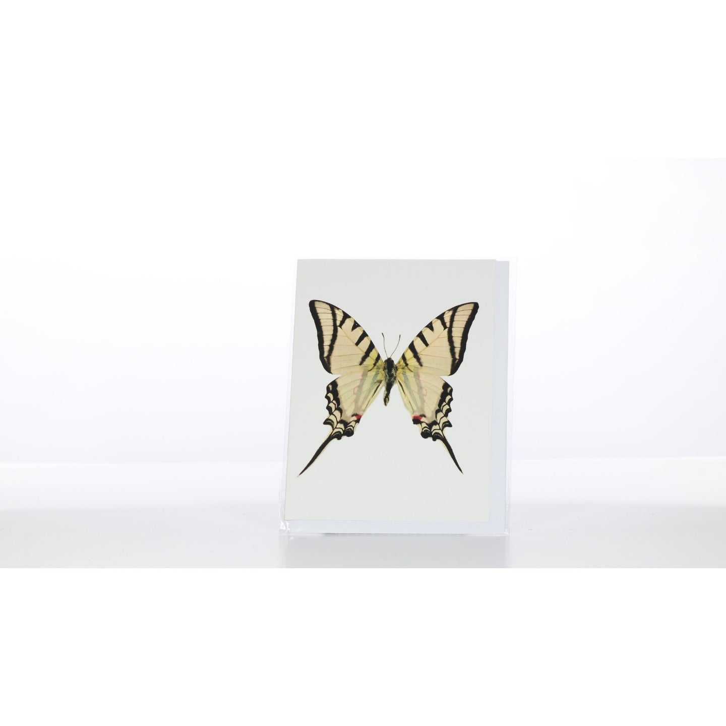 Greeting Card GC25 - Insecta Etcetera