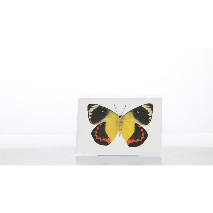 Greeting Card GC26 - Insecta Etcetera