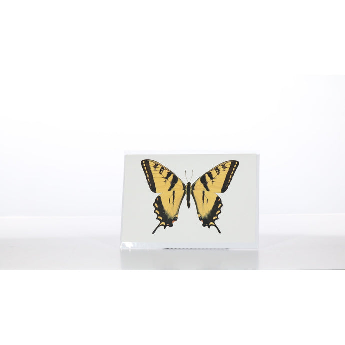 Greeting Card GC27 - Insecta Etcetera