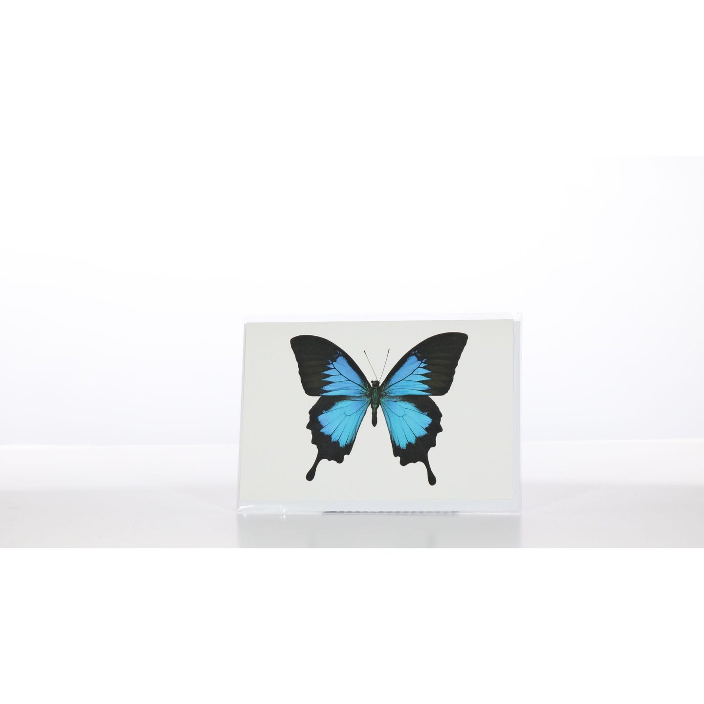 Greeting Card GC28 - Insecta Etcetera