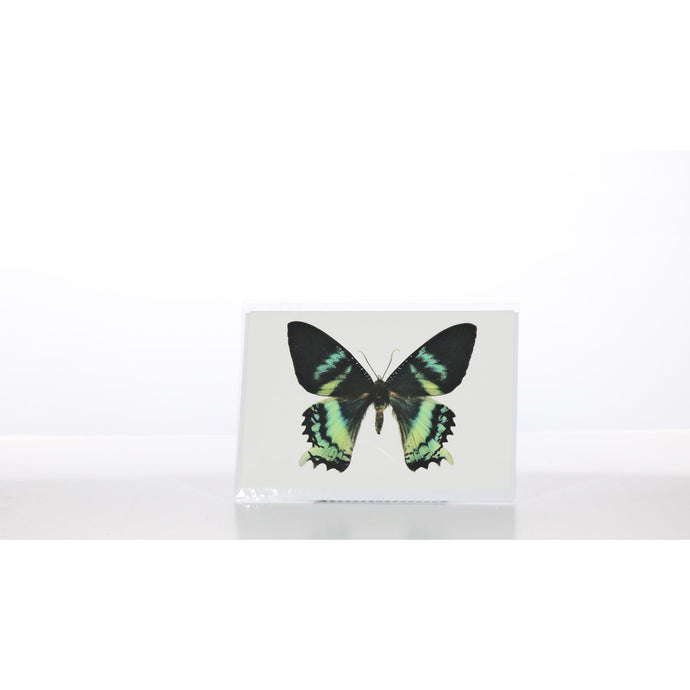 Greeting Card GC29 - Insecta Etcetera