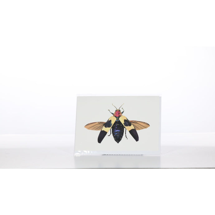 Greeting Card GC31 - Insecta Etcetera