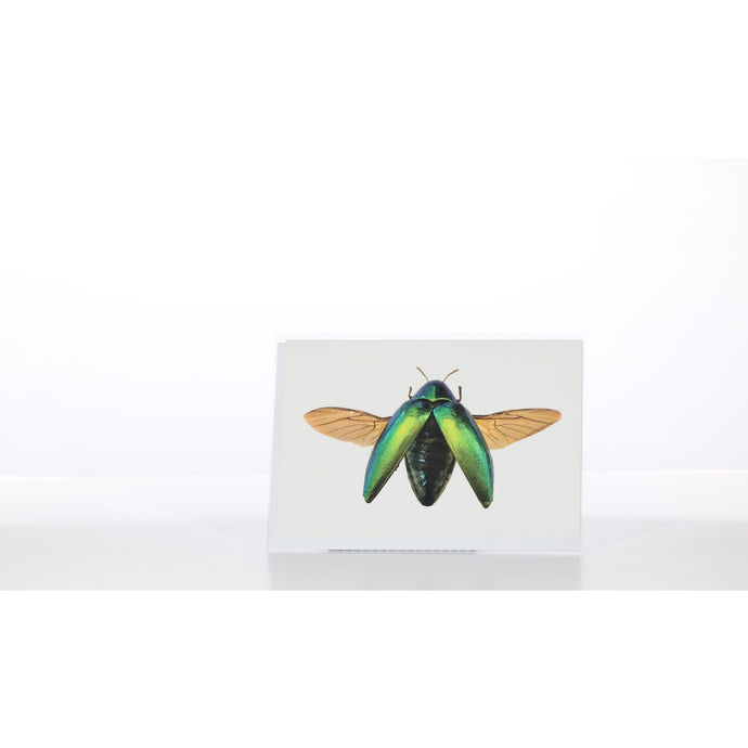 Greeting Card GC32 - Insecta Etcetera