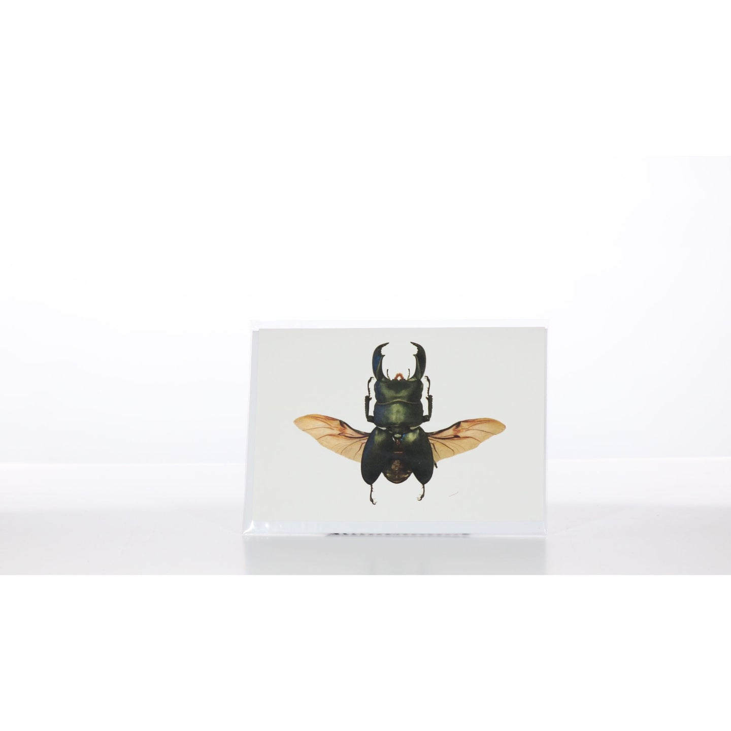 Greeting Card GC33 - Insecta Etcetera