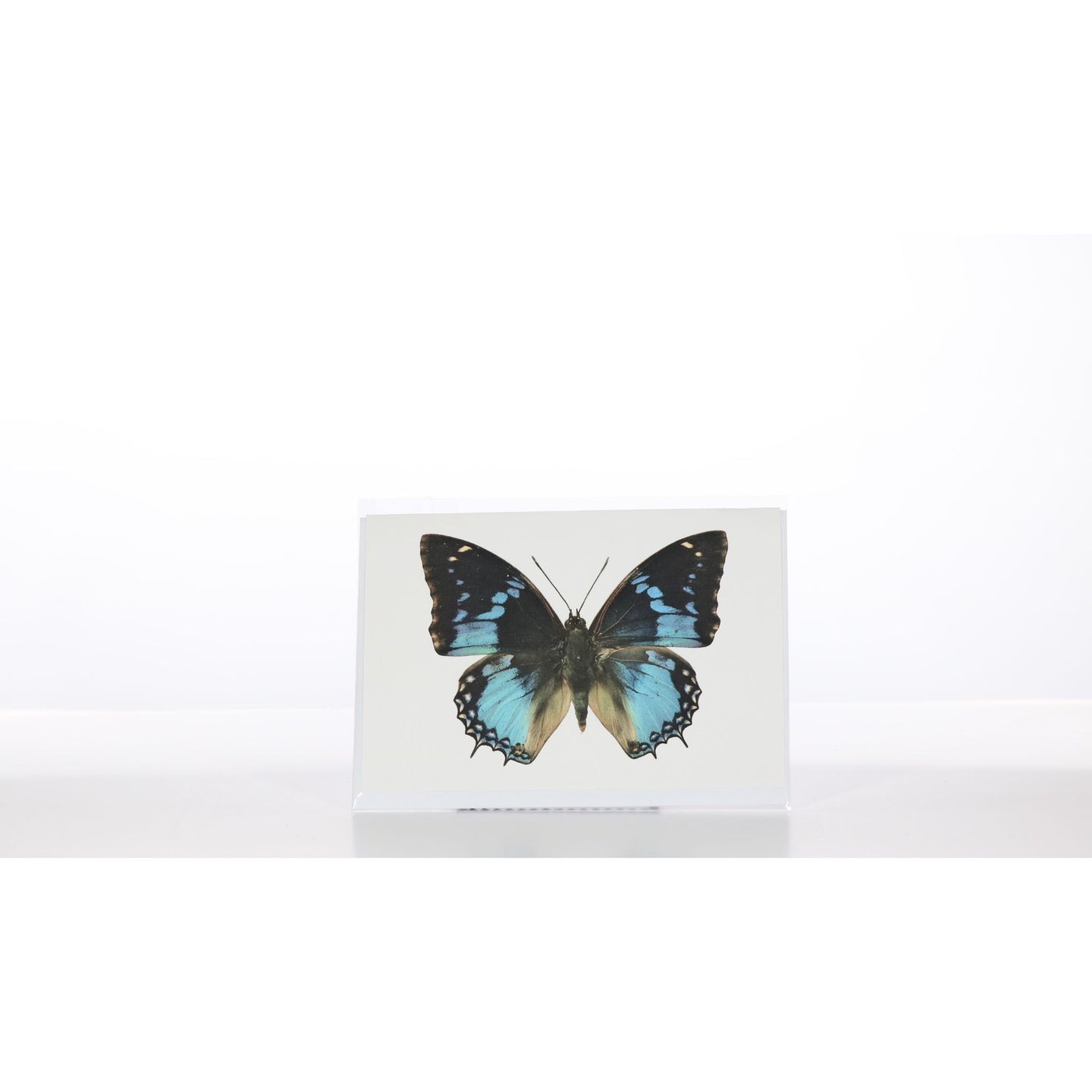 Greeting Card GC5 - Insecta Etcetera
