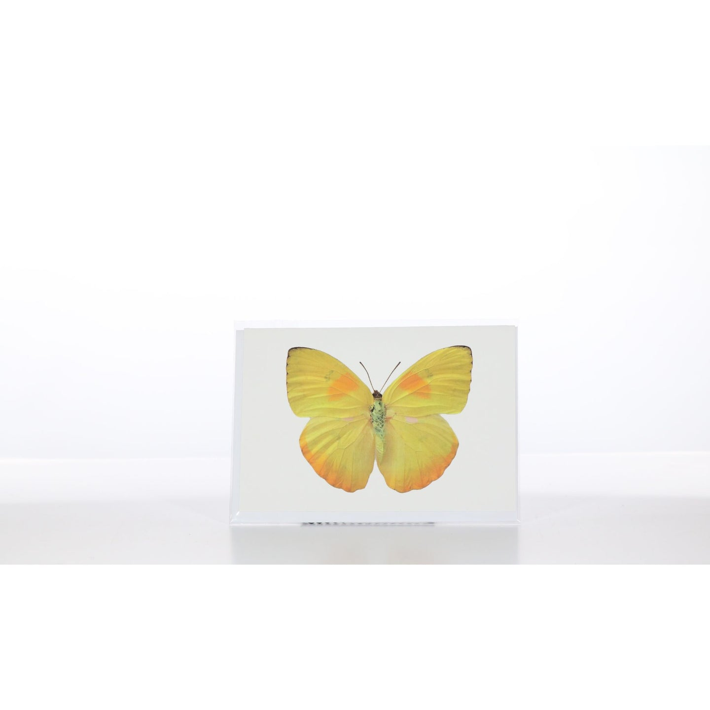 Greeting Card GC6 - Insecta Etcetera