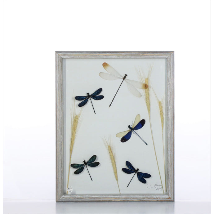 Damselfly Mix 11x14 Gray #108 Framed Art - Insecta Etcetera