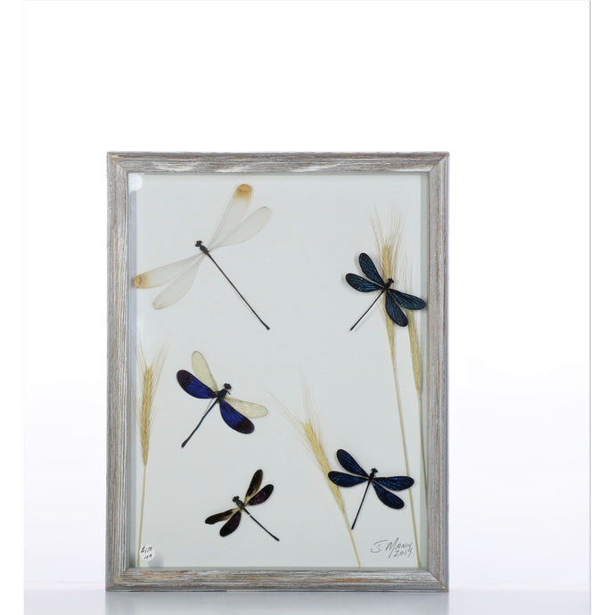 Damselfly Mix 11x14 Gray #109 Framed Art - Insecta Etcetera