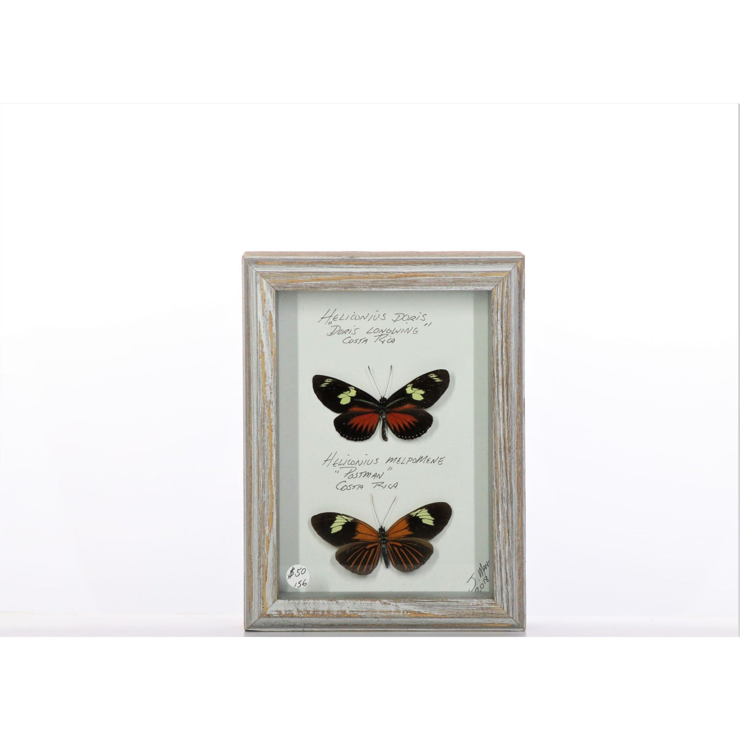 Two Helicon Butterflies 5x7 Gray #156 Framed Art - Insecta Etcetera