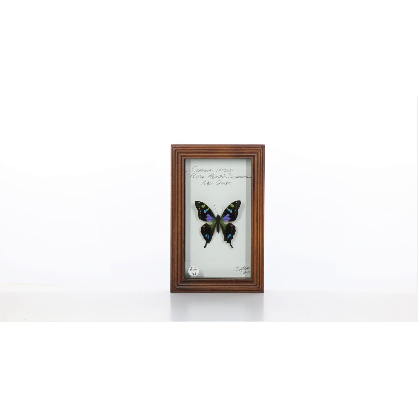Purple Spotted Swallowtail 4x7 Brown #189 Framed Art - Insecta Etcetera