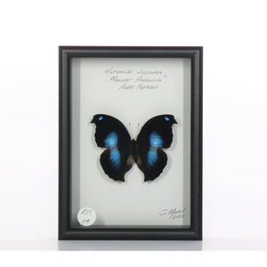 Moonset Hookwing 5x7 Black #214 Framed Art - Insecta Etcetera