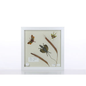 Flying Dragon 9x9 White #223 Framed Art - Insecta Etcetera