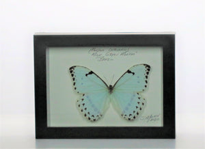 Mint Green Morpho 5x7 Black #252 Framed Art