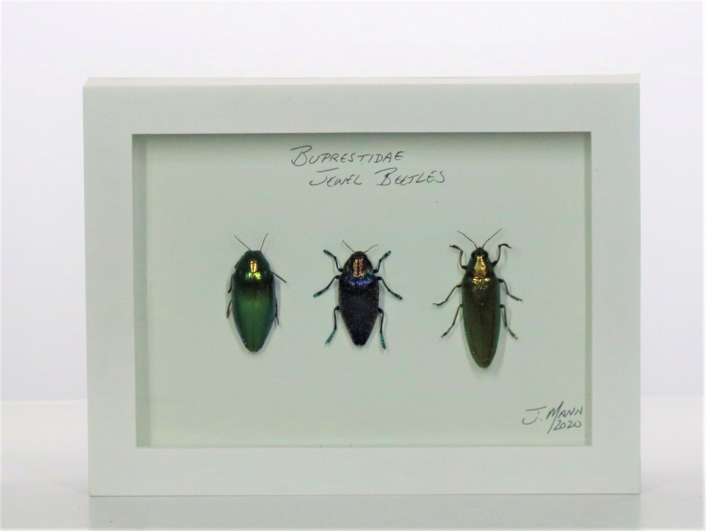 Jewel Beetles 5x7 White #268 Framed Art