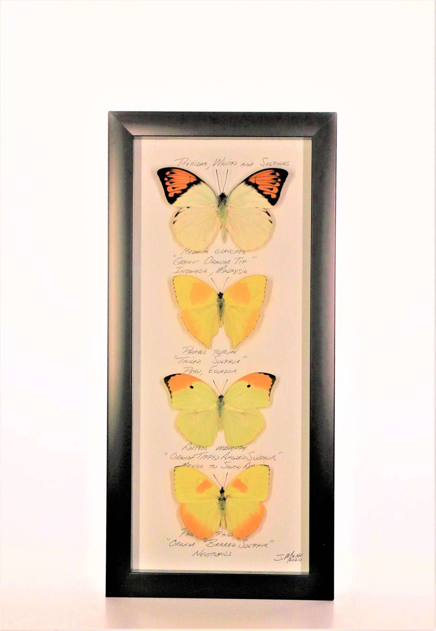 Large Sulphurs 6x14 Black #274 Framed Art