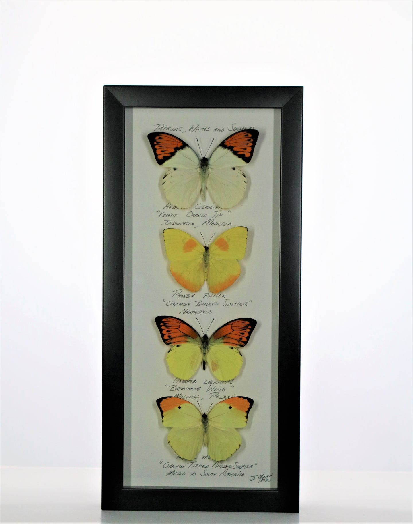 Large Sulphurs 6x14 Black #275 Framed Art