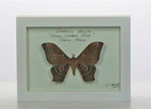 Edible Catepillar Moth 5x7 White #283 Framed Art