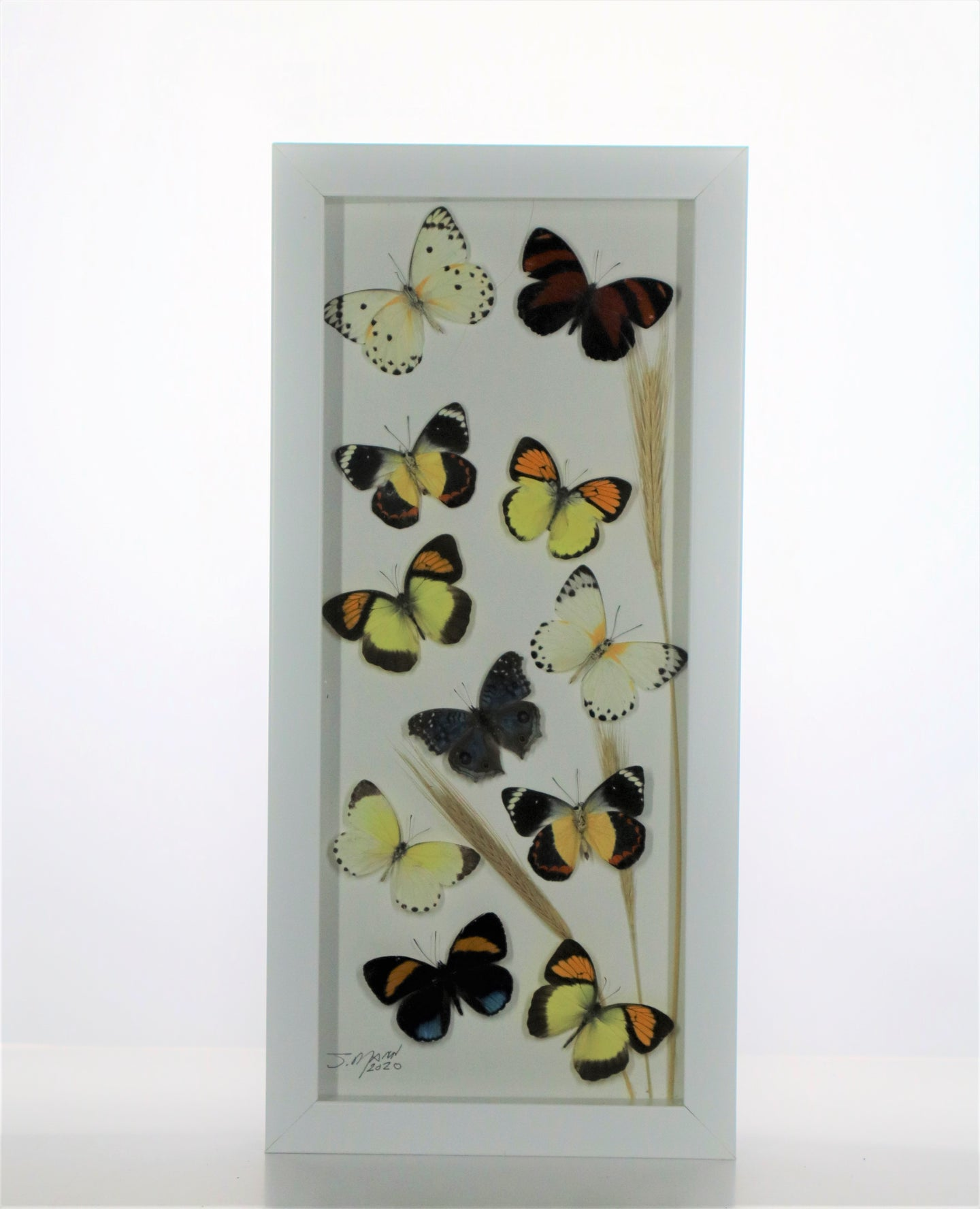 Small Sulphurs 6x14 White #294 Framed Art