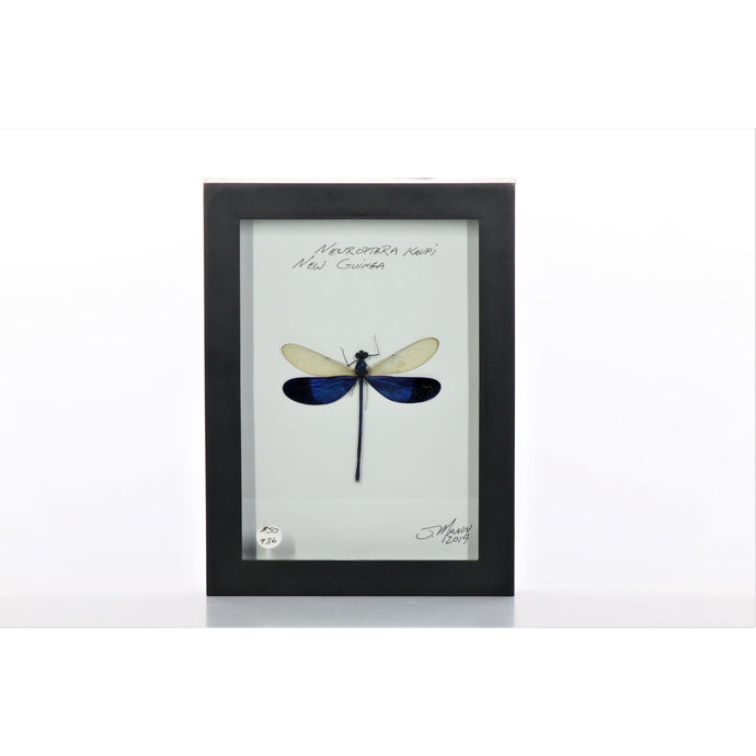 Damselfly White & Purple 5x7 Black #936 Framed Art - Insecta Etcetera