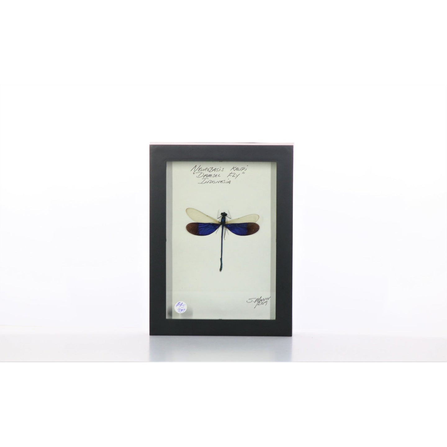 Damselfly White & Purple 5x7 Black #989 Framed Art - Insecta Etcetera