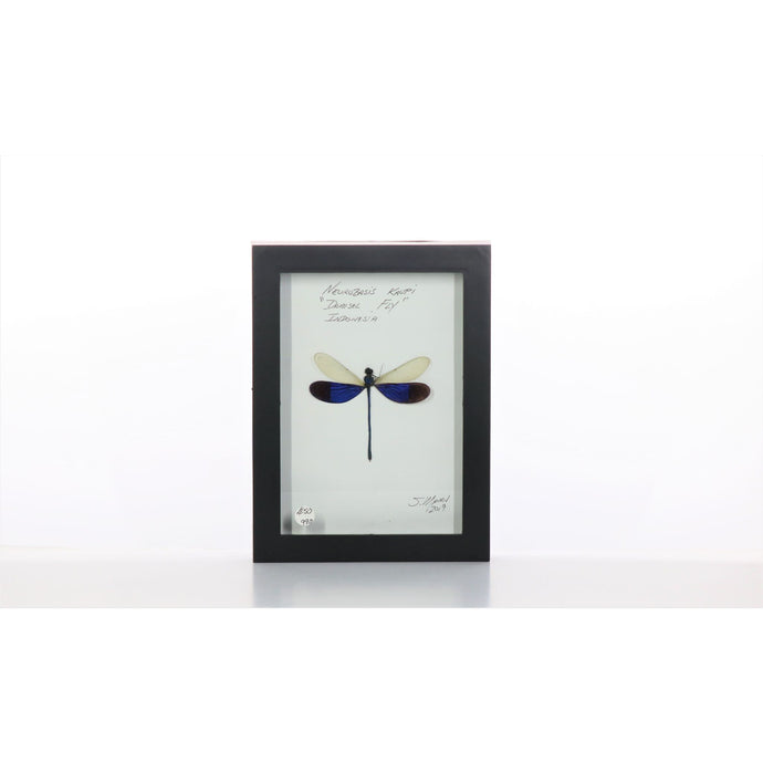 Damselfly White & Purple 5x7 Black #990 Framed Art - Insecta Etcetera