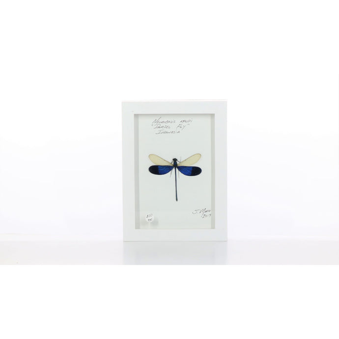 Damselfly White & Purple 5x7 White #995 Framed Art - Insecta Etcetera
