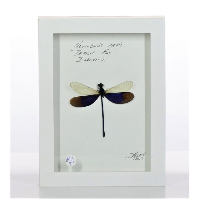 Damselfly White & Purple 5x7 White #996 Framed Art - Insecta Etcetera