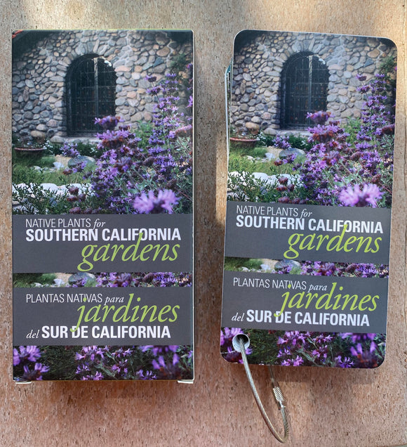 Native Plants for Southern California Flashcards