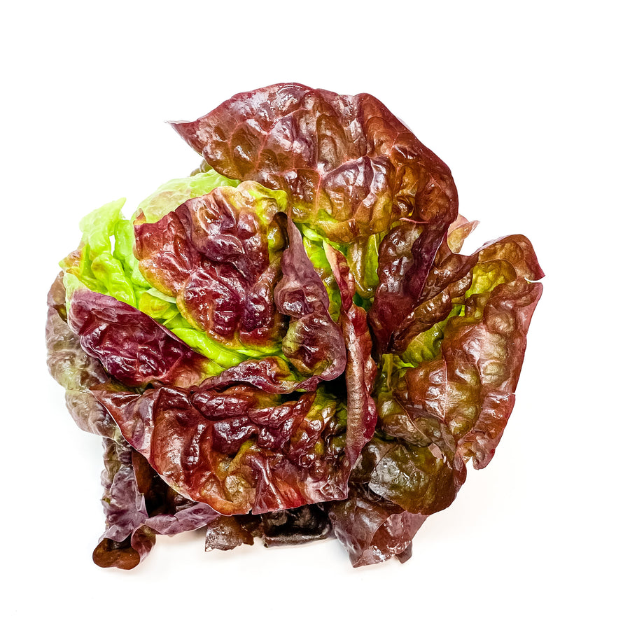 Red Boston Bibb Lettuce Head - Organic