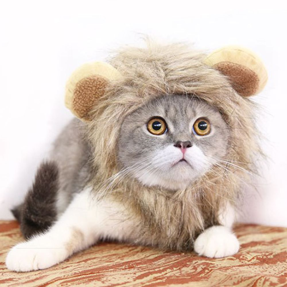 Cute Lion Costume