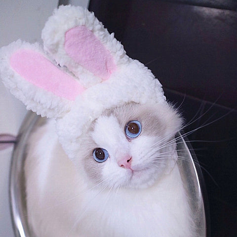 Cat Bunny Rabbit Ears