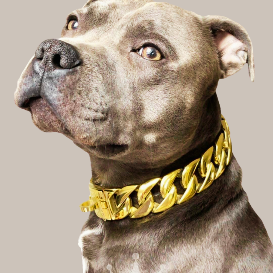 Gold Chain Dog Collars | 32mm Stainless Steel Thick Gold Chain for Dogs