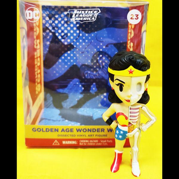 Wonder Woman Dissected Anatomy Figure