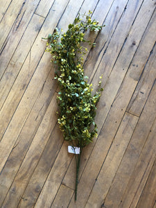 "Hanging Bog Pimpernel Bush 32"" Tall"