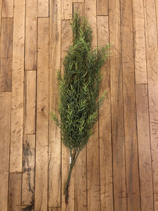 "Dill Leaves Hanging Bush 34"" tall"